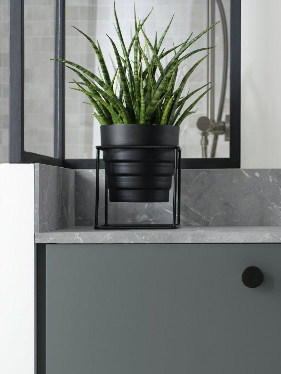 Des plantes grasses ou dépolluantes idéales pour la salle de bains.