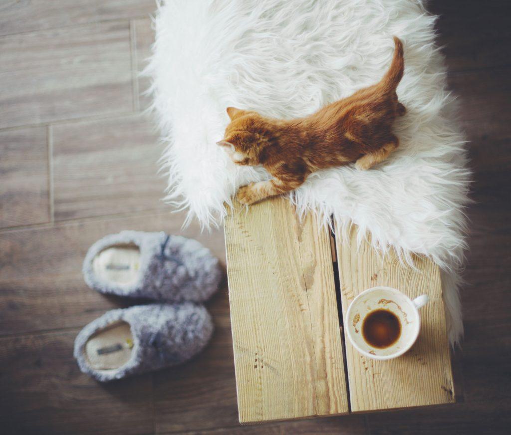 Vue de dessus d'un jeune chat tigré roux posé sur une couverture à côté d'une tasse blanche posée sur un tabouret en bois clair avec des pantoufles grises posées sur le plancher en bois.