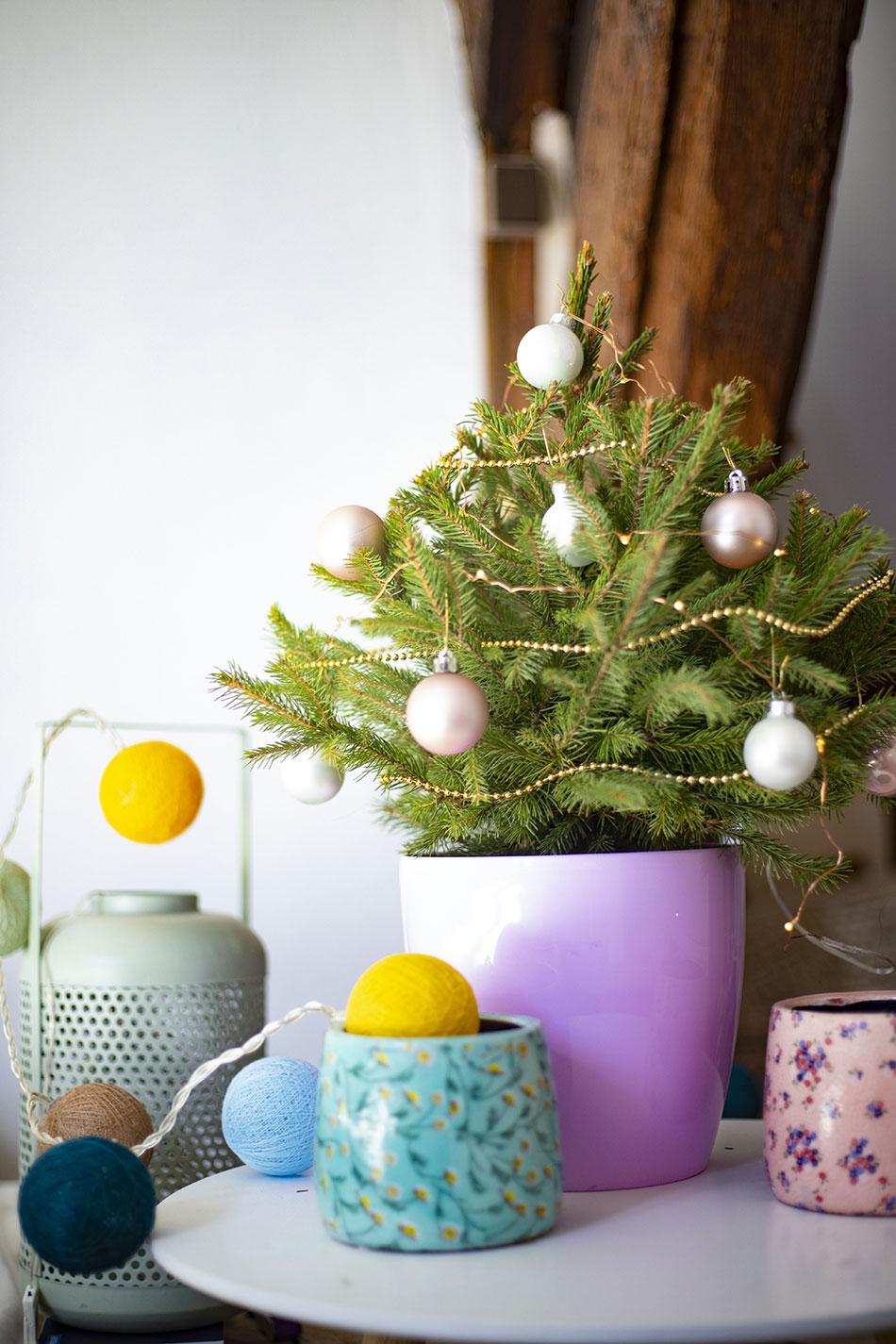 petit sapin en pôt pour Noël