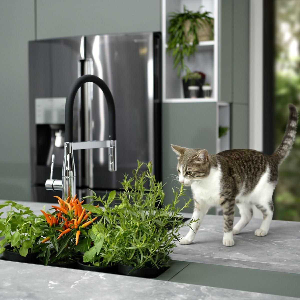Avec cet aménagement sur mesure, Schmidt fait entrer la nature à domicile en permettant de faire pousser ses plantes aromatiques et petits légumes maison.