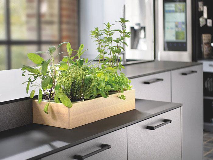 Jardinière herbes aromatiques fraîches en cuisine